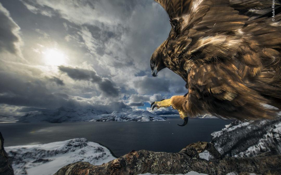 Las mejores fotografías de vida silvestre