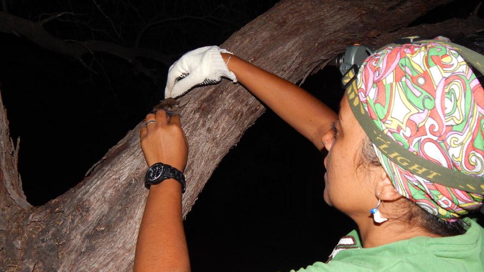 Descubren una nueva especie de murciélago en La Rioja