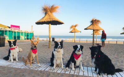 Eukanuba en la playa Canina Yes! de Mar del Plata