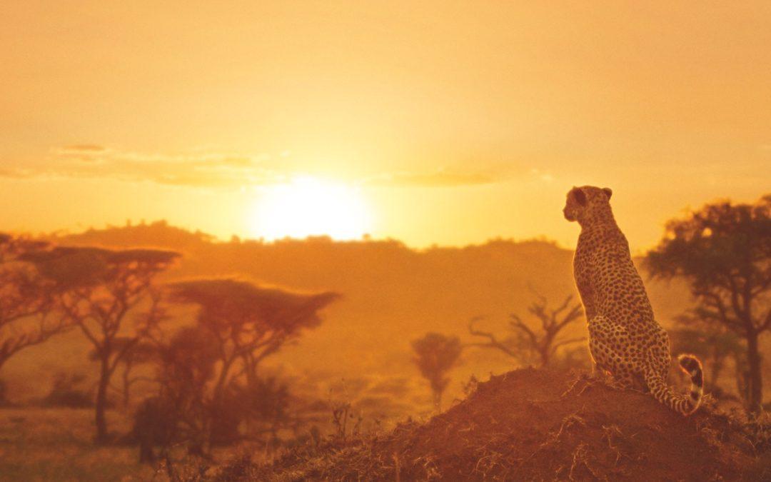 Serengueti, el nuevo documental de Discovery