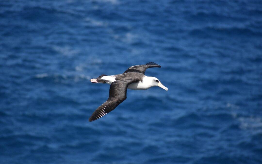 Día Mundial del Albatros